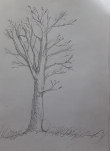 Small hazel tree
