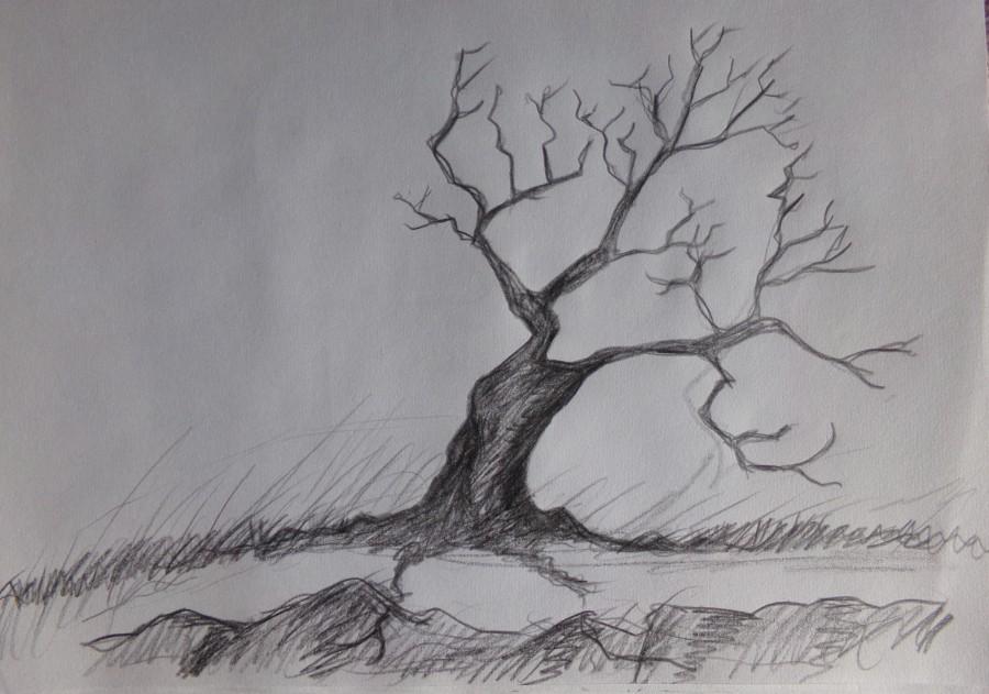 Coastal Tree