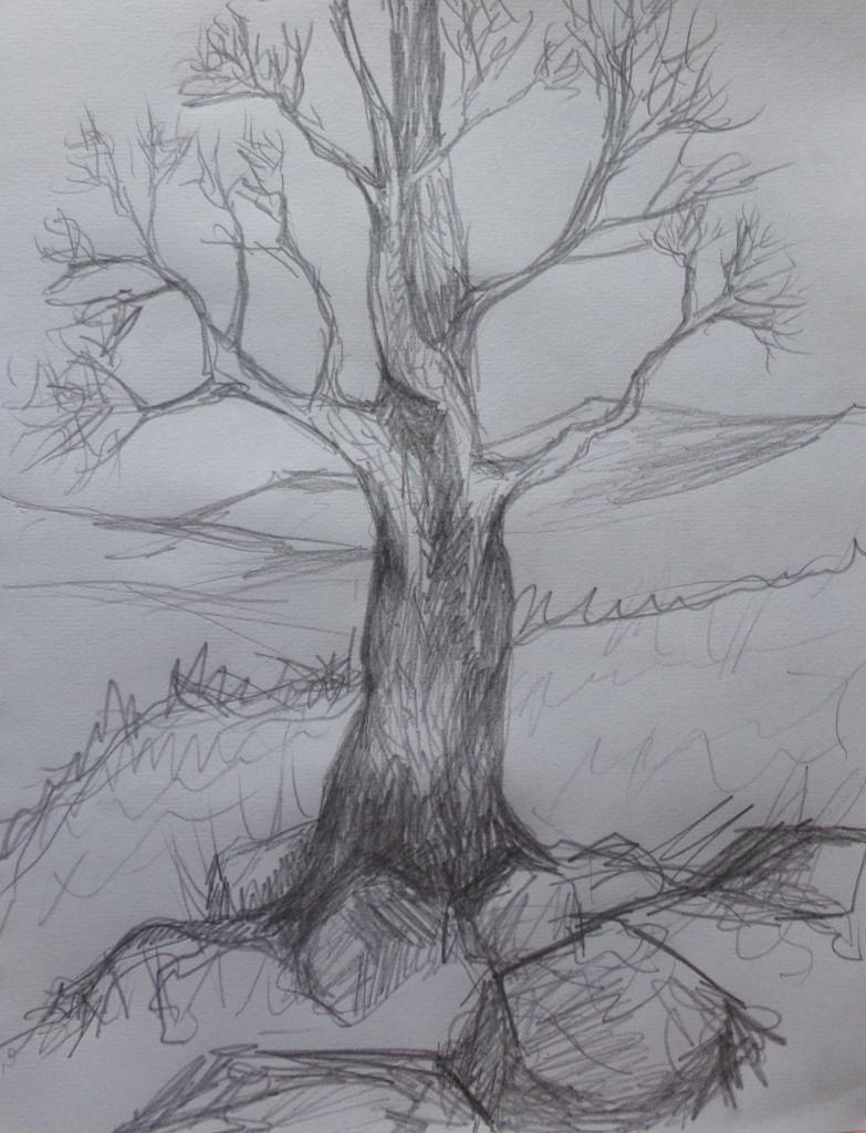 Tree growing through rocks