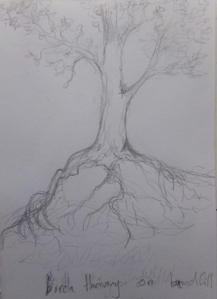 Sketch 191 Birch tree thriving on landfill