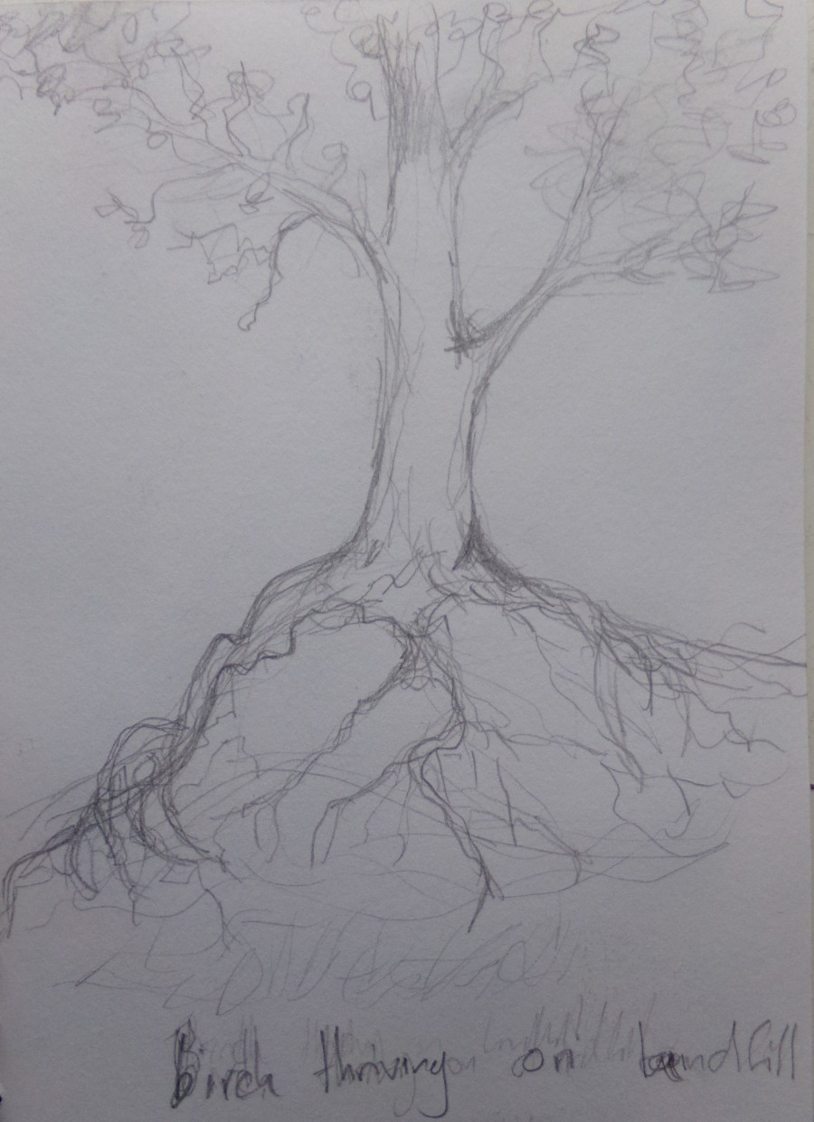 Sketch 191 Birch tree thriving on landfill