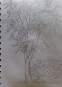 Sketch day 185, Tree