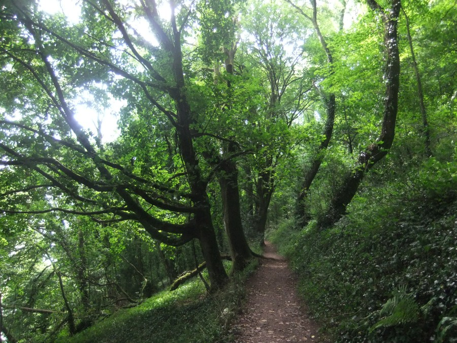 Path to Dylan's shed, photograph by AnneMarie Foley