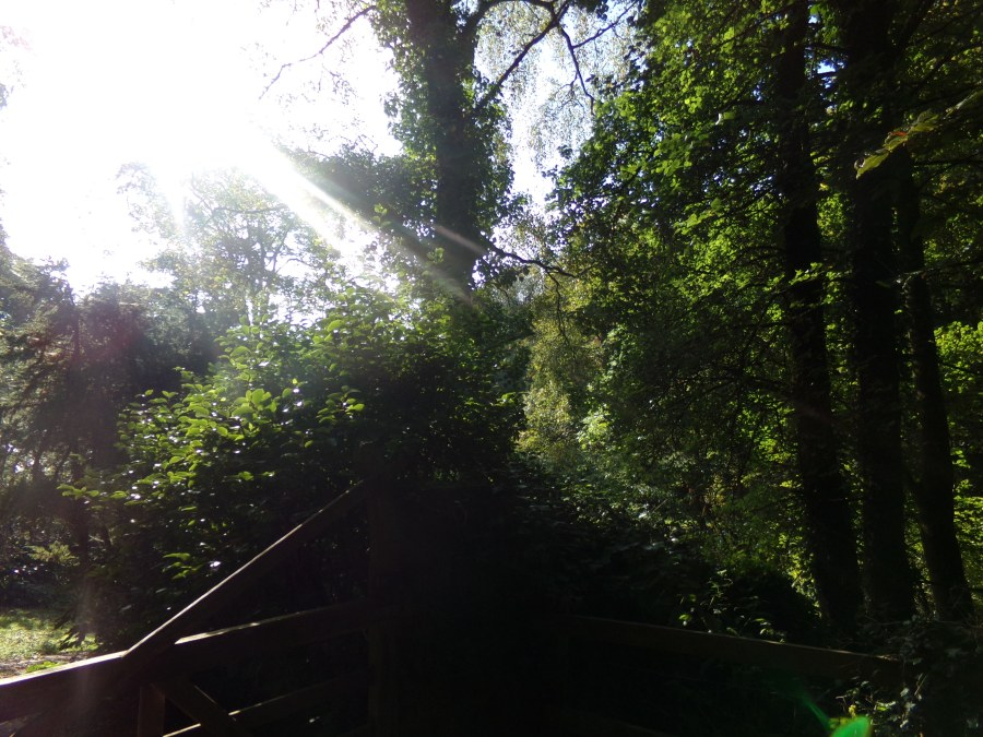sunbeams through the trees, photograph by AnneMarie Foley