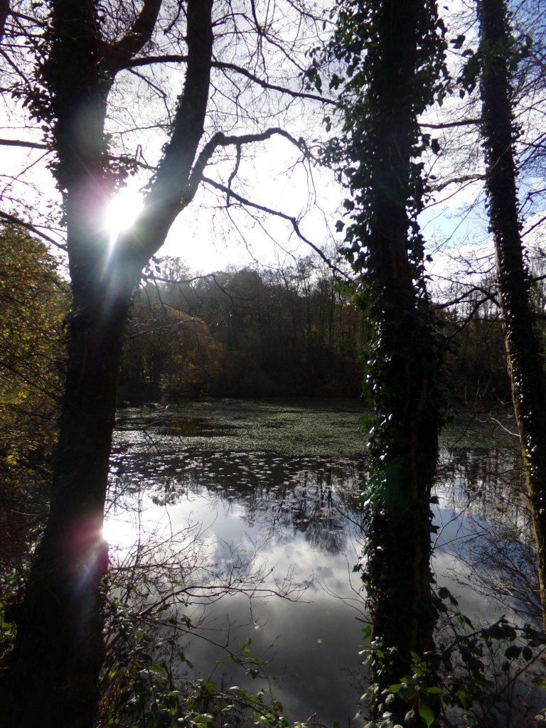 Carmarthen reservoir, photograph by AnneMarie Foley